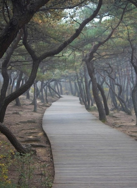 path7